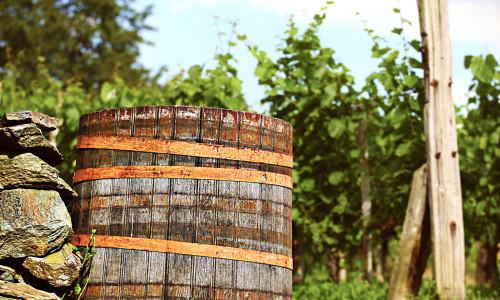 Vinens historie