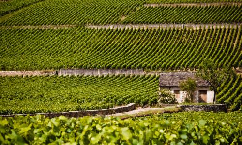 Hvitvin fra Burgund med skrukork
