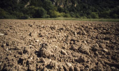 Hvordan utvikler planten seg i jordsmonn
